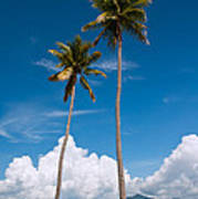 Coconut Trees Art Print