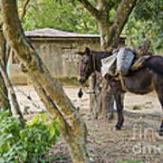 Coffee Country Dominican Republic Art Print