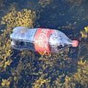 Coke Among The Seaweed Art Print
