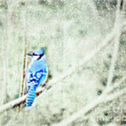 Cold Day For A Blue Jay Art Print