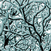 Cold Frosted Limbs Above Art Print