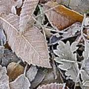 Cold Leaves Art Print