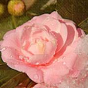 Cold Swirled Camellia Art Print