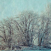 Cold Winter Day Art Print