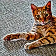 Cole Kitty Art Print