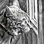 Cole Kitty Watchful Art Print