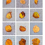 Collage - Leaves On Granite 1 Art Print