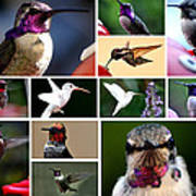 Collage Of Hummers 2 Art Print