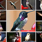 Collage Of Hummers Art Print