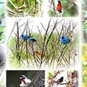 Collage Of Indigos 10 Art Print