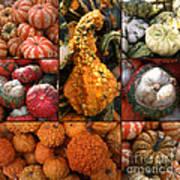 Collage - Pumpkins - Gourds - Elena Yakubovich Art Print