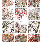 Collage The Beauty Of Rowan Art Print