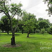Colonial Apple Orchard Art Print