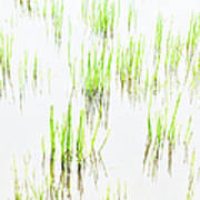 Colony Of Grass Art Print