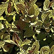 Color Engraving 1 Art Print