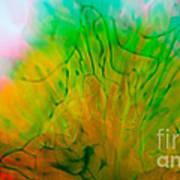Color Formations II Art Print