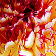 Color In A Carnation Art Print