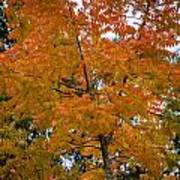 Color Of Fall Art Print