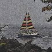 Color Of The Sails Art Print