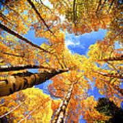 Colorado Autumn Sky Art Print