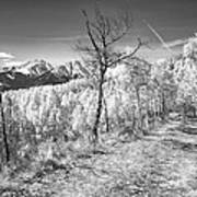 Colorado Backcountry Autumn View Bw Print by James BO  Insogna