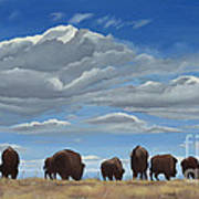 Colorado Bison Moving On Art Print