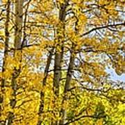 Colorado Fall Aspens 2 Art Print