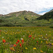 Colorado Meadow And Mountain Landscape Art Print