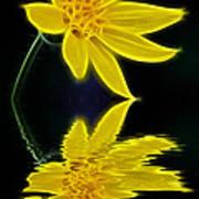 Colorado Wildflower Art Print
