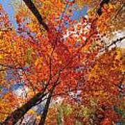 Colored Leaves Ground To Sky Art Print