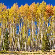 Colorful Aspen Panorama Art Print