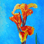 Colorful Canna Art Print
