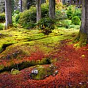 Colorful Carpet Of Moss In Benmore Botanical Garden. Scotland Art Print
