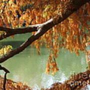Colorful Fall Bald Cypress Art Print