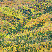 Colorful Fall Forest Near Rangeley Maine Art Print
