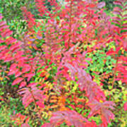 Colorful Fall Leaves Autumn Crepe Myrtle Art Print
