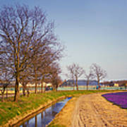 Colorful Fields Of Holland Art Print