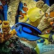 Colorful Fish Art Print