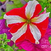 Colorful Garden Flower Art Print