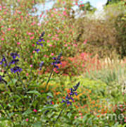 Colorful Garden In Spring Art Print