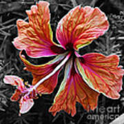 Colorful Hibiscus On Black And White 2 Print by Kaye Menner