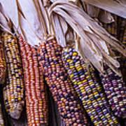 Colorful Indian Corn Art Print