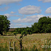 Colorful Kansas Country Pasture Art Print