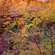Colorful Leaves On A Tree Art Print