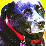 Colorful Old Dog Art Print