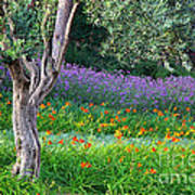 Colorful Park With Flowers Art Print