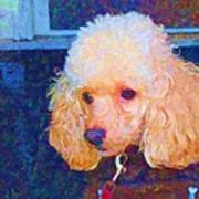 Colorful Poodle Art Print