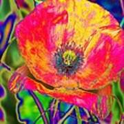 Colorful Poppy Art Print