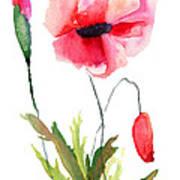 Colorful Poppy Flowers Art Print