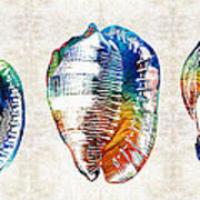 Colorful Seashell Art - Beach Trio - By Sharon Cummings Art Print
